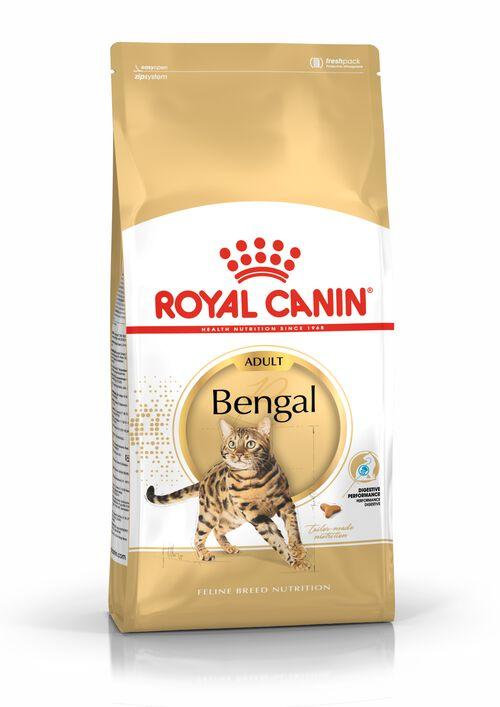 Bengal Adulte
