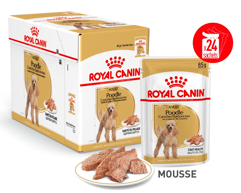 Caniche en Mousse x24