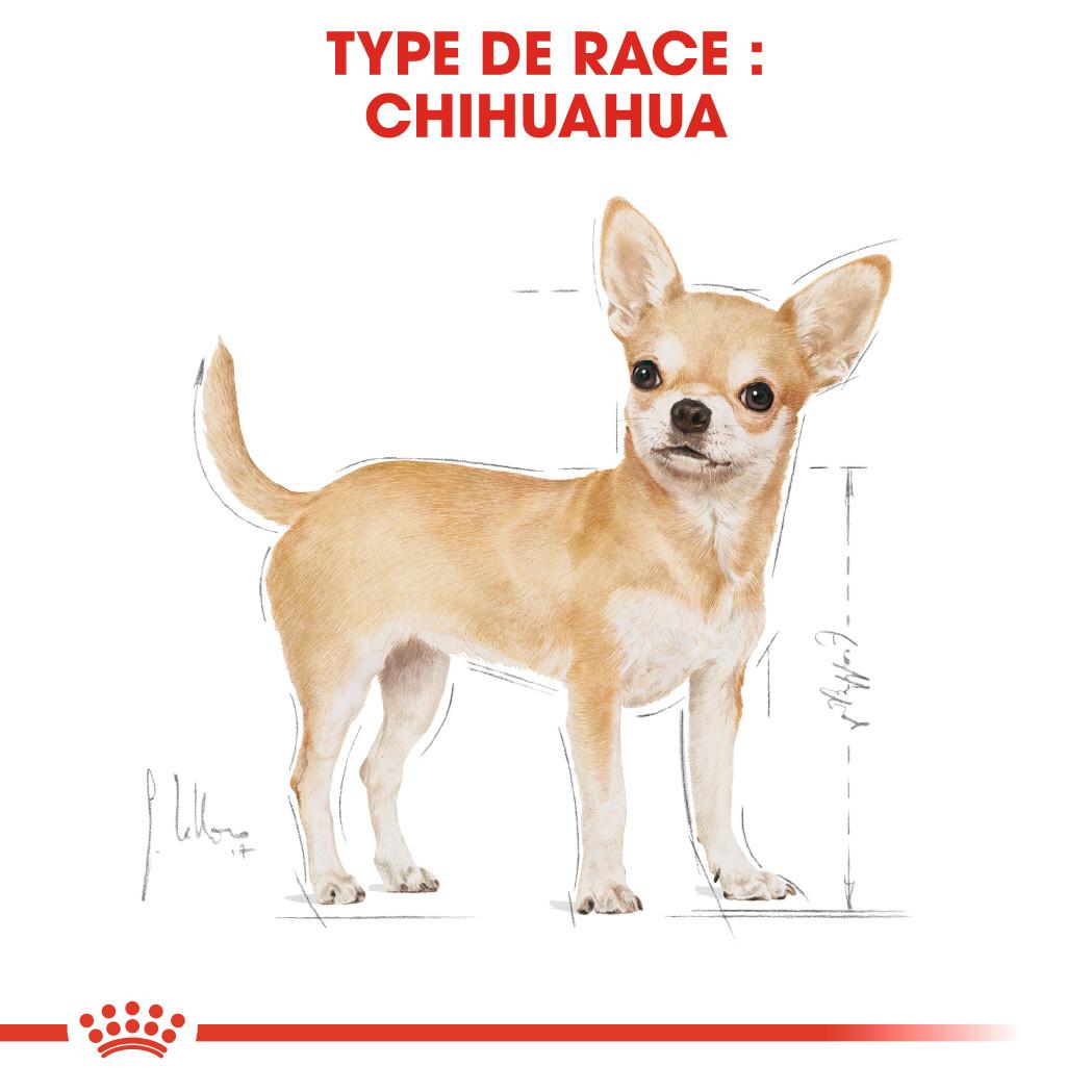 Chihuahua en Mousse x24