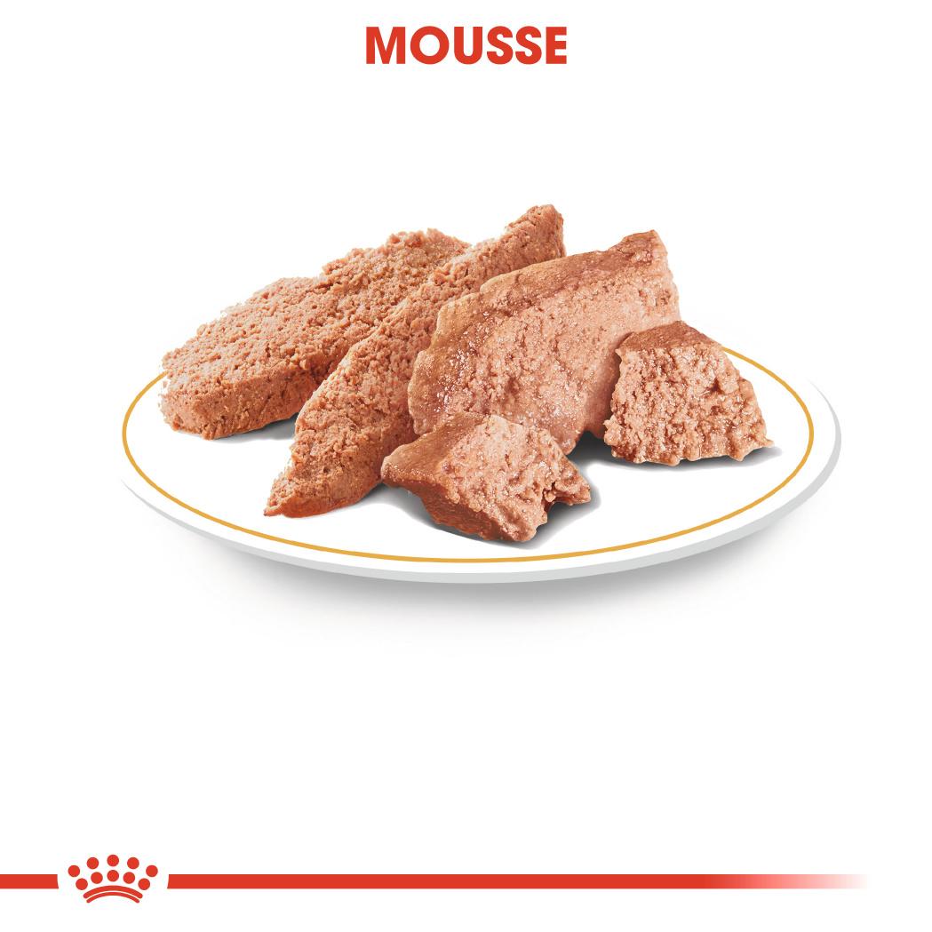 Yorkshire Terrier en Mousse x24