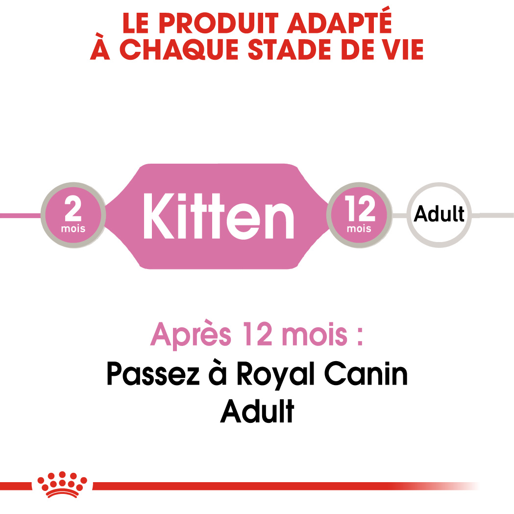 Kitten en Sauce x24 ou x48