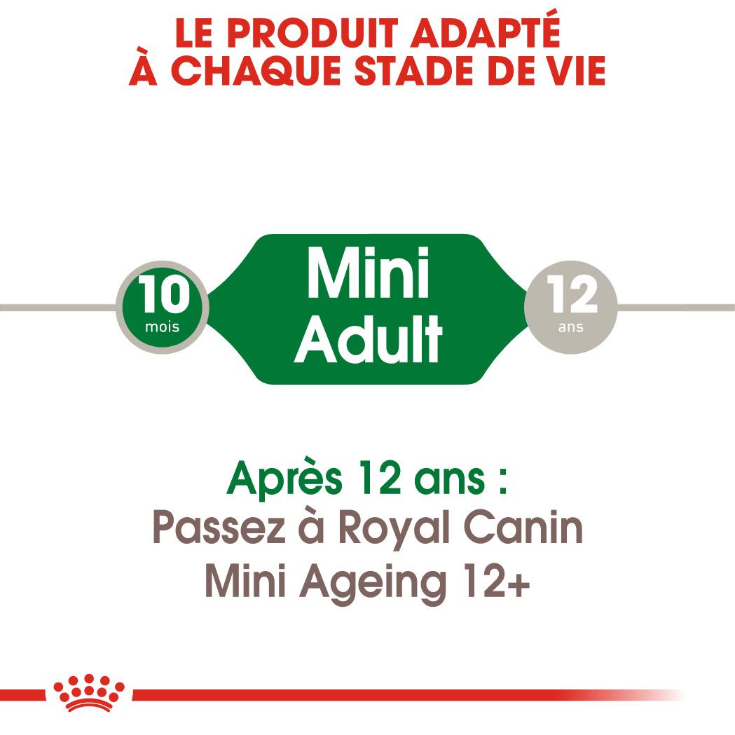 Mini Adult en Sauce x24 ou x48