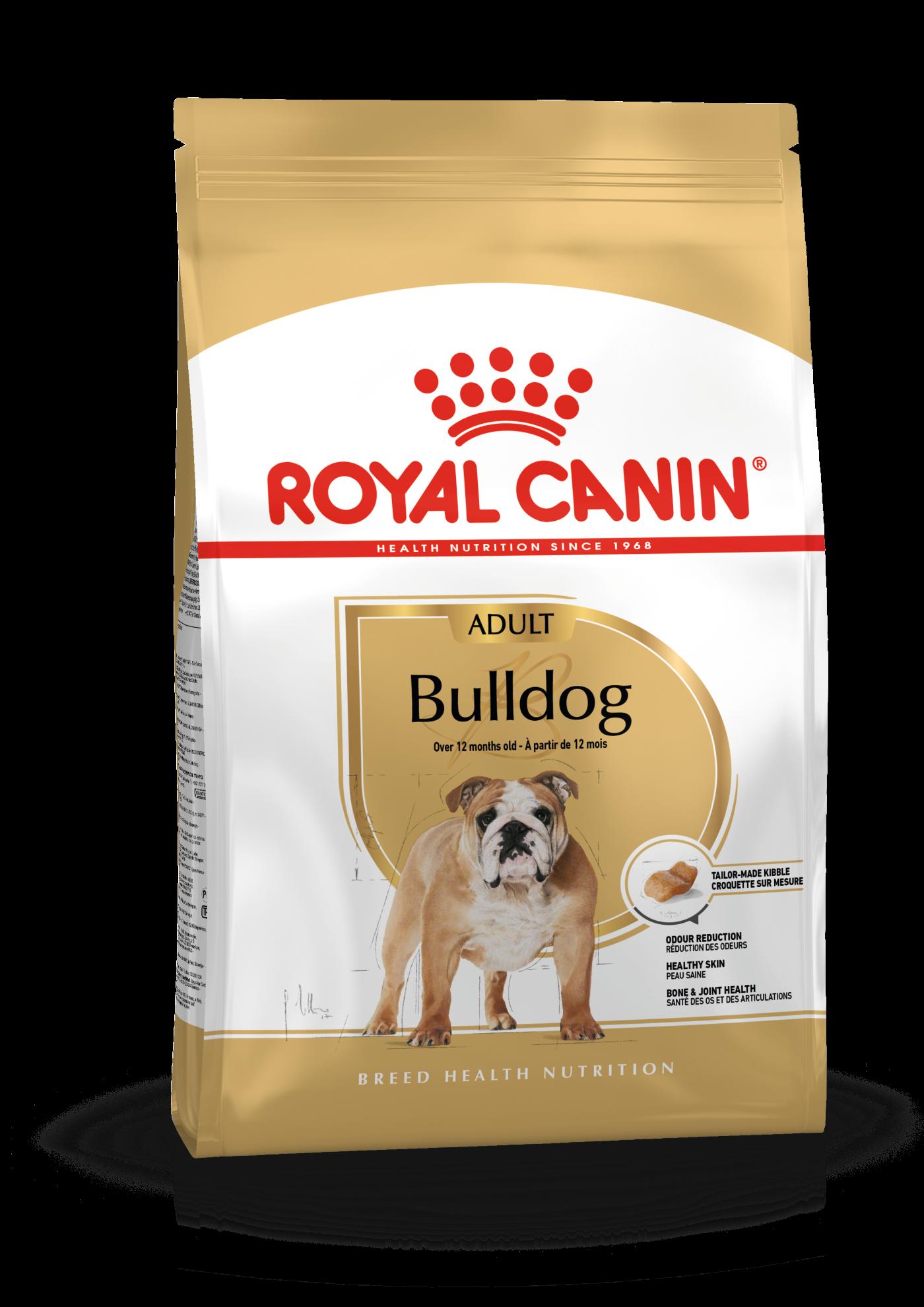 Bulldog Adulte