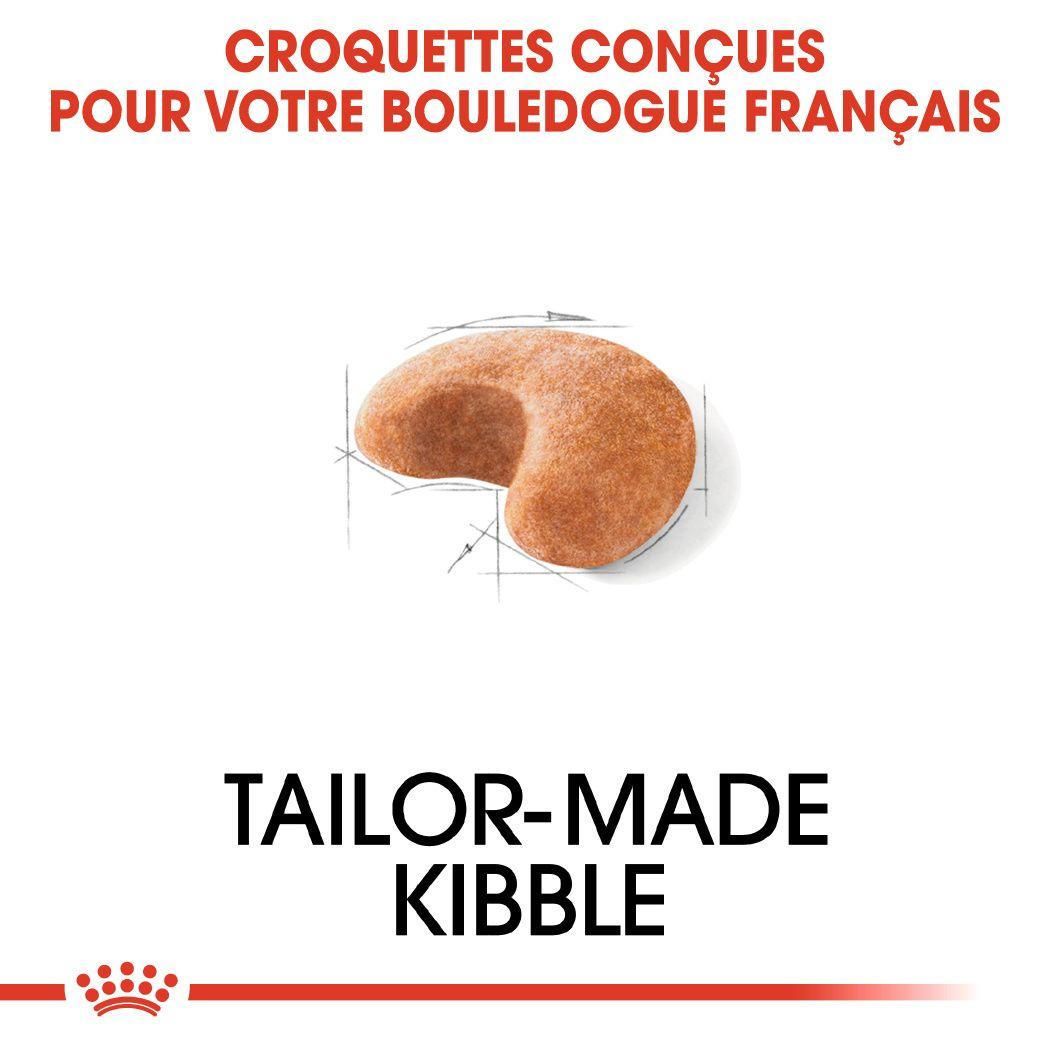 Bouledogue Français Adulte