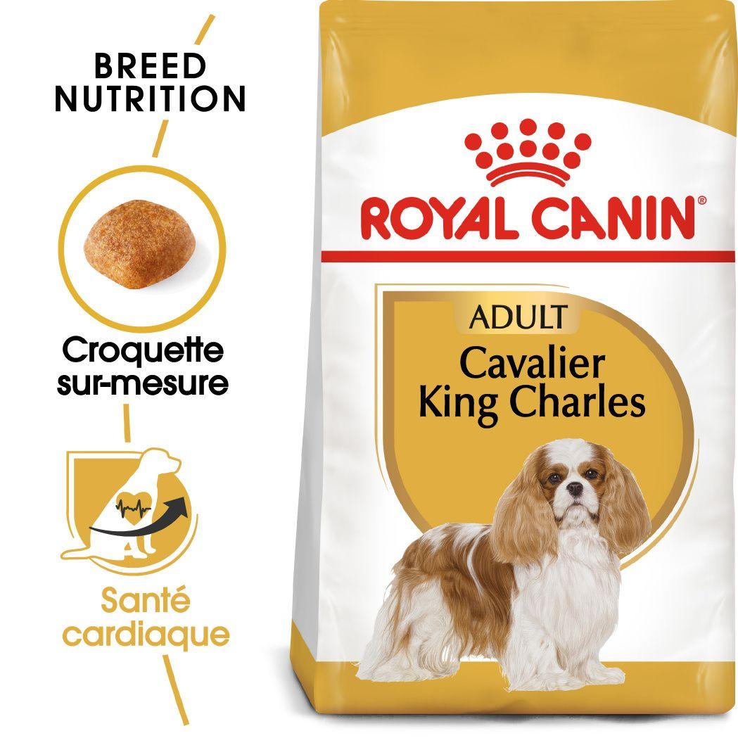 Cavalier King Charles Adulte