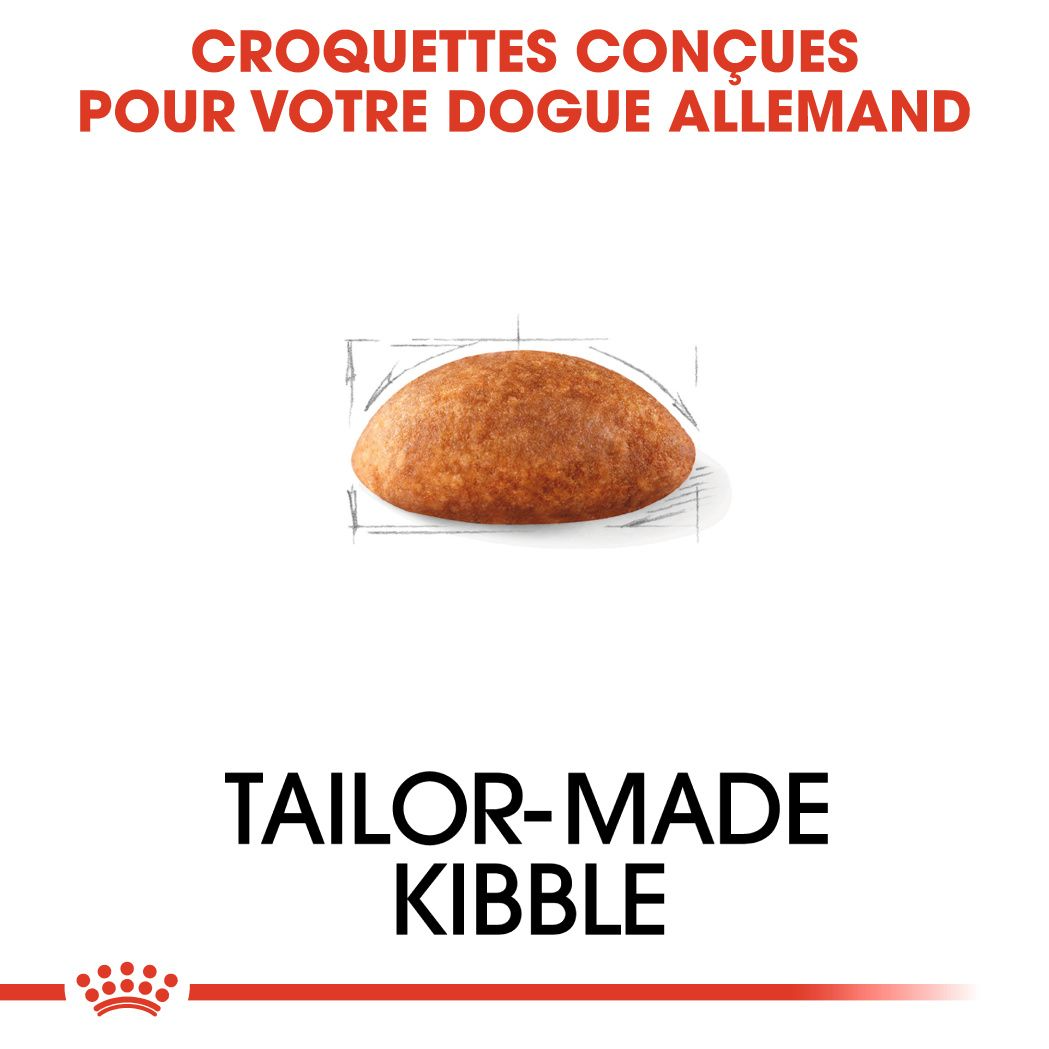 Dogue Allemand adulte