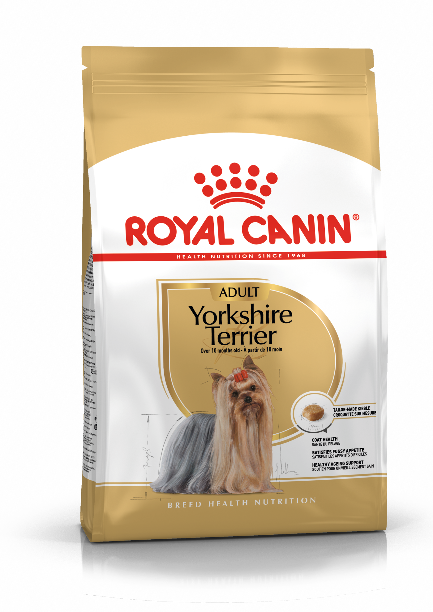Yorkshire Terrier Adulte