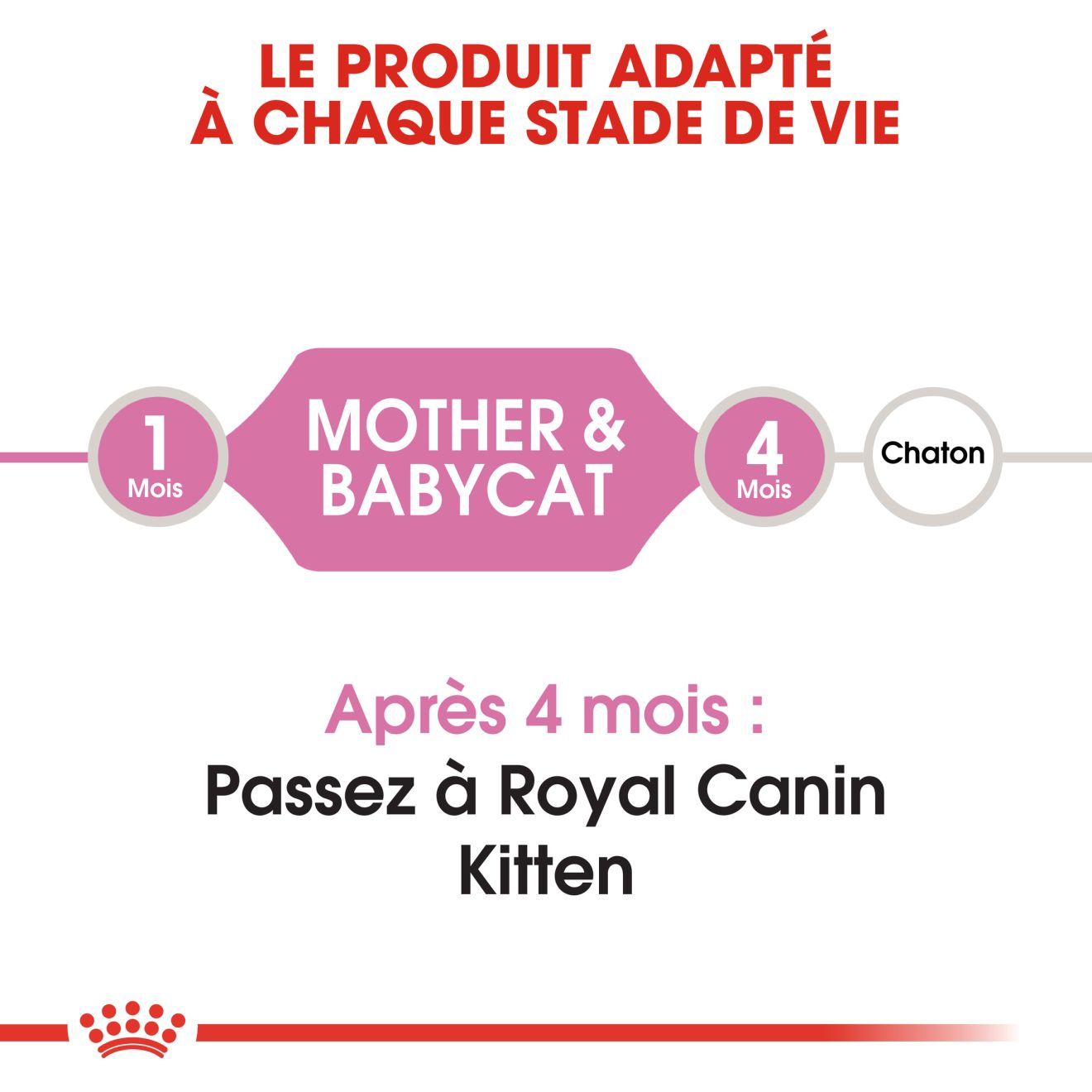 Mother & Babycat