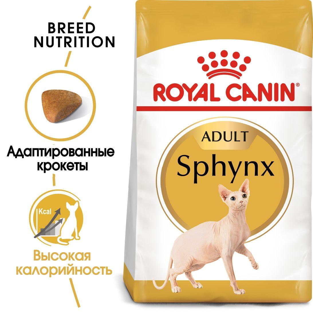Sphynx Adult