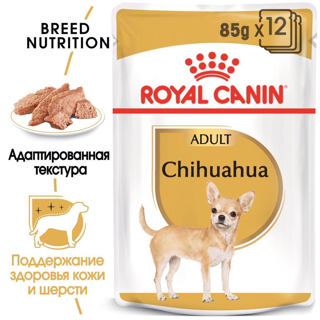 Chihuahua adult (в паштете)