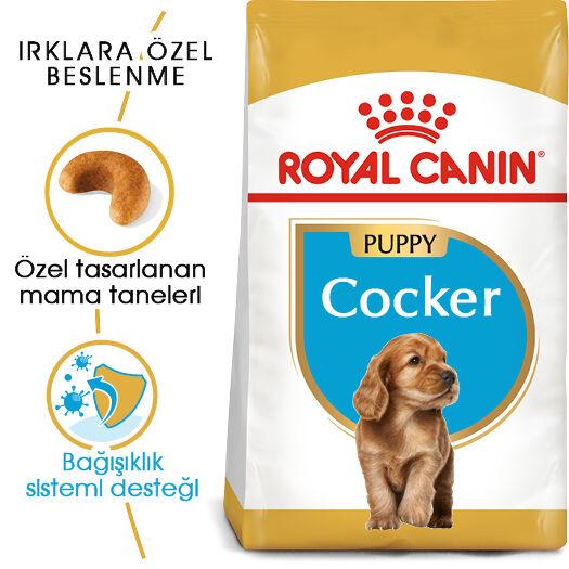 Cocker Puppy