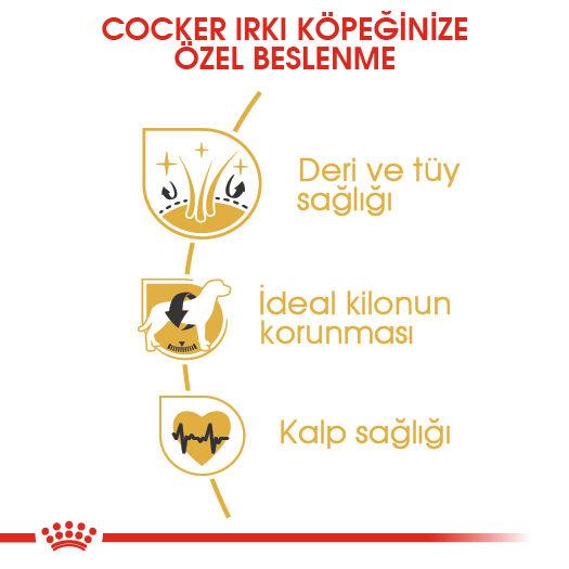 Cocker Adult