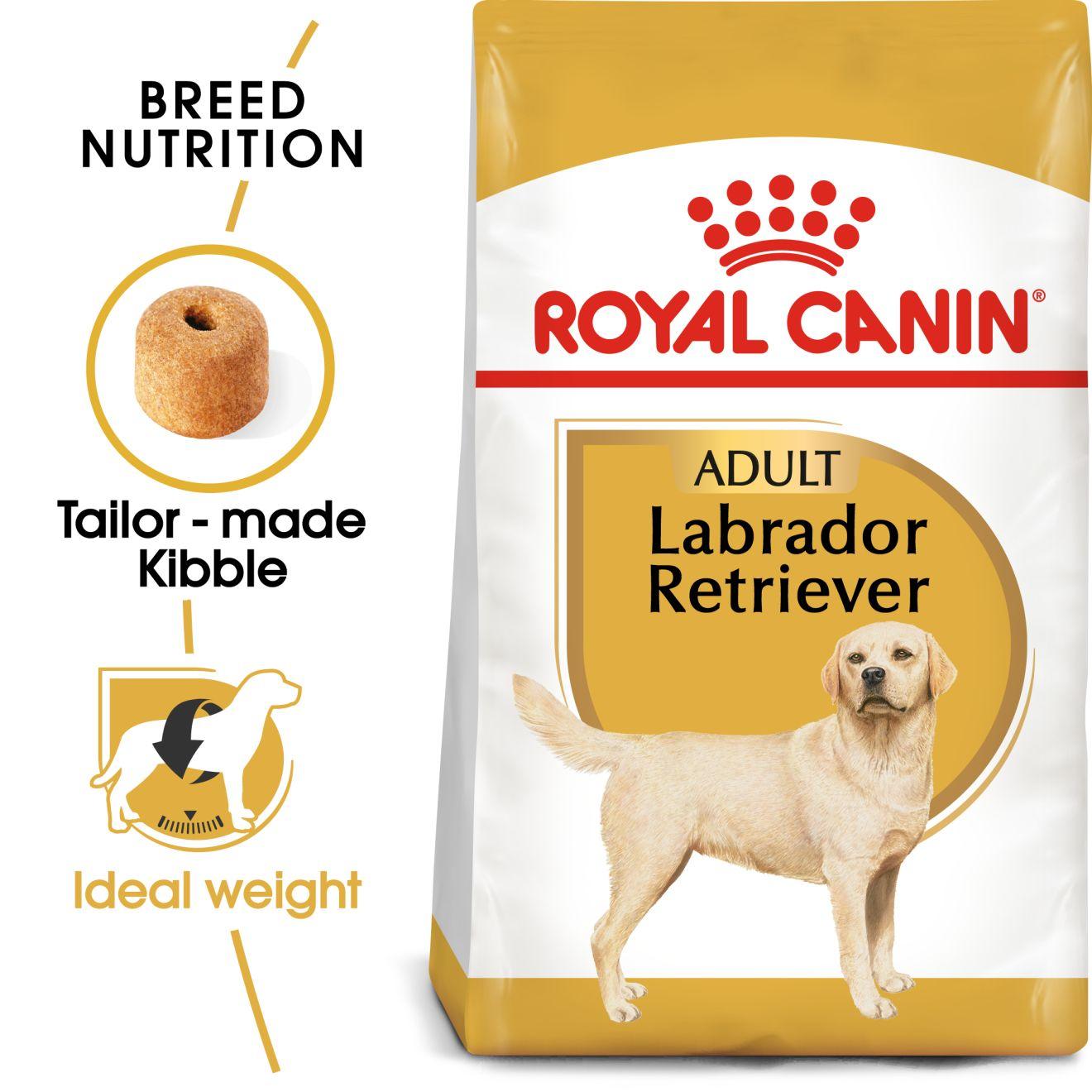 Labrador Retriever Adult