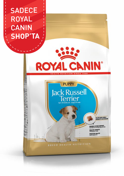 Jack Russell Puppy product image