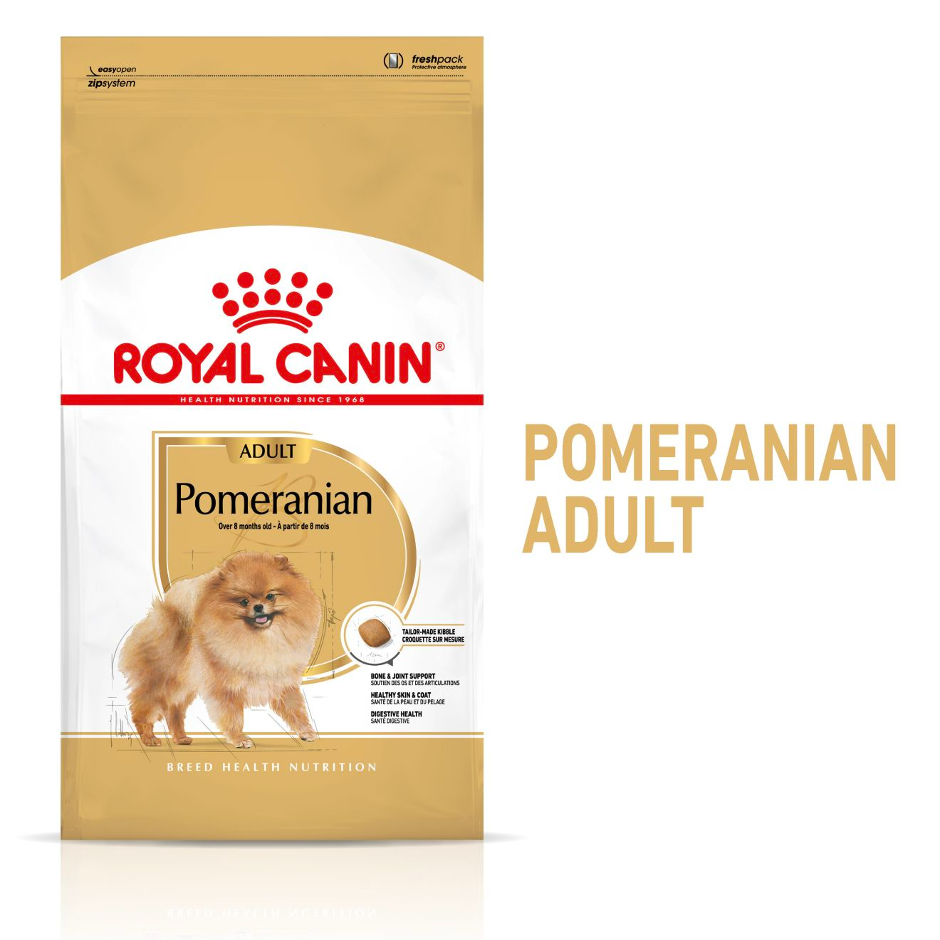 Pomeranian Adult